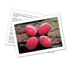 Infokarte / Mineralienkarte Rhodonit
