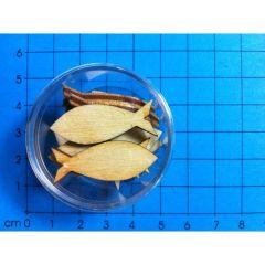 Holz Fisch geschlossen 30mm in Dose ca. 13 St.