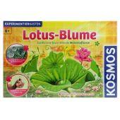 Experimentierkasten Lotus-Blume - ab 8 Jahren