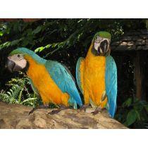 Effekt-Postkarte 3D: 2 Papageien