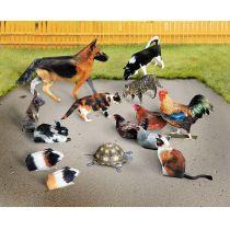 Schreiber-Bogen Haustiere