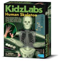 4M Kidz Labs - Human Skeleton