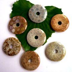 Donut versteinerte Koralle 40 mm