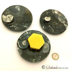 Schale flach Versteinerung mit Ammonit, rund