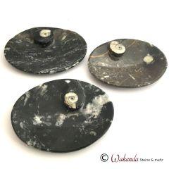 Schale flach Versteinerung mit Ammonit, oval
