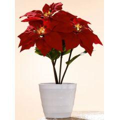 Weihnachtsstern im Topf mit 5 LED Blüten, rot, 23 x 23 x 36 cm