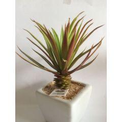 Sukkulente Deko-Kaktus im Keramiktopf, 12 cm