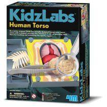 4M Kidz Labs - Human Torso