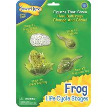 Frog Life Cycle Stages - Lebenszyklus eines Froschs