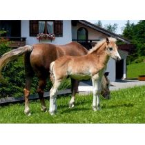Postkarte mit 3D Effekt: Pferde