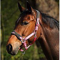 Luxus-Stallhalfter mit Fleece Pony