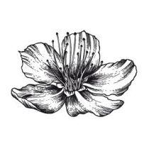 Clearstempel Blumen Nr. 77