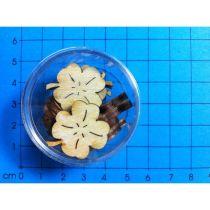 Kleeblatt 20 mm in Dose ca. 15 Stück
