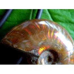 Ammonit opalisierend / irisierend, Anhänger gebohrt