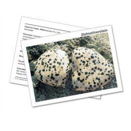 Infokarte / Mineralienkarte Dalmatinerstein
