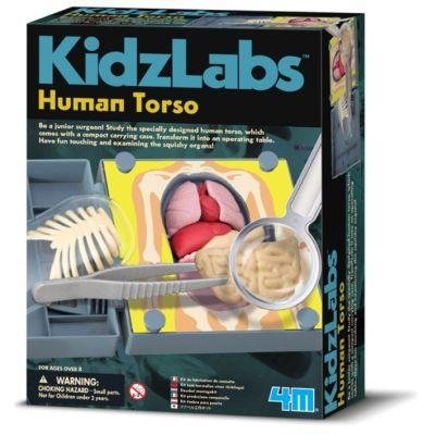 4M Kidz Labs - Human Torso | 210-68484 / EAN:4018928684840