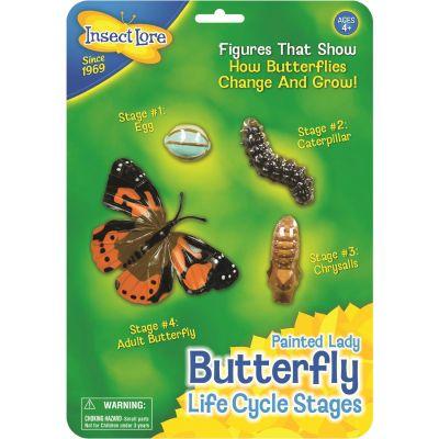 Butterfly Life Cycle Stages - Lebenszyklus eines Schmetterlings | 210-48122 / EAN:0735569047608