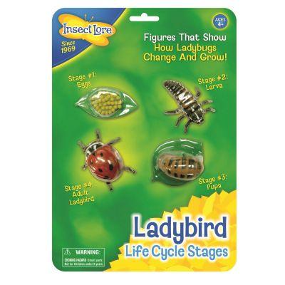 Ladybird Life Cycle Stages - Lebenszyklus eines Marienkäfers   210-48127 / EAN:0735569060904